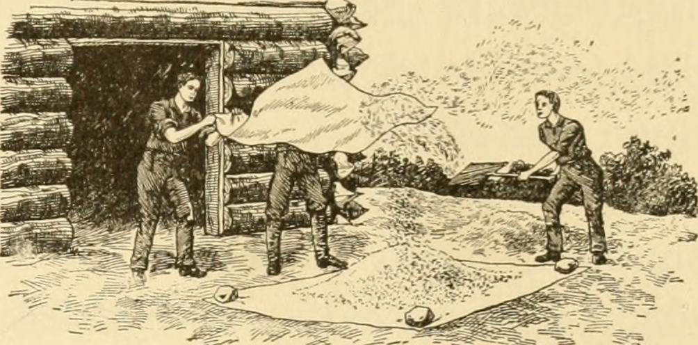 """Winnowing from The story of agriculture in the United States"""" (1916)"""