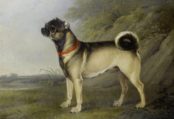 Five breeds of dog in the Georgian era